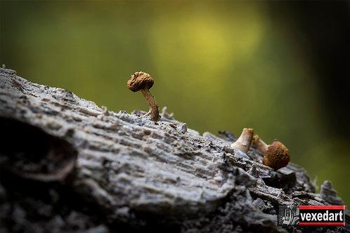 'Broken' Mushroom Photography Art Prints | Marco Mushroom Art