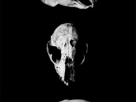 *NEW * Black & White skull photography prints