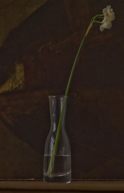 Narcissus in carafe