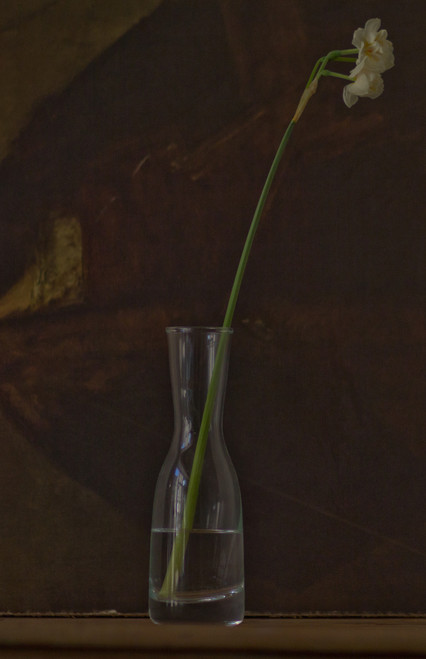 Narcissus in carafe