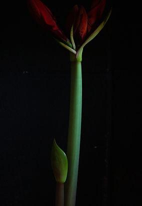 Dark A lil 2.jpg