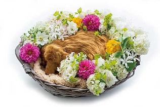 花送り画像