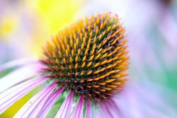 bloom-22786_1280