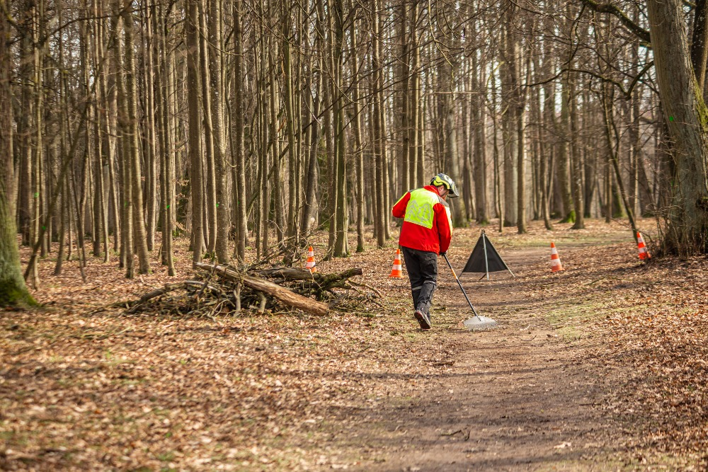 Tree care in Kaunas oak forest