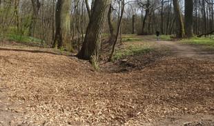 Kauno Ąžuolyne – nauji patalai medžiams