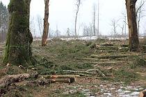 BAST Strėvininkų miškas (LTKAI0002 kerti