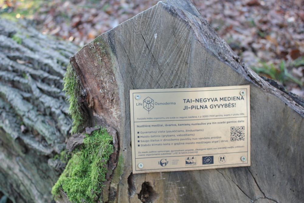 Lentelė apie negyvą medieną