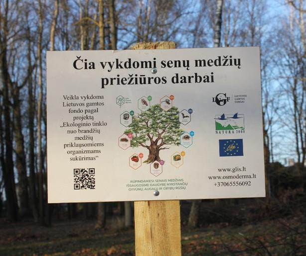 Kviečiame dalyvauti konkurse: ekologiniu požiūriu vertingų medžių tvarkymo paslaugos Kauno ąžuolyne