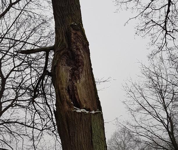 Netrukus šlaite ties Verkių dvaro parku prasidės medžių senolių priežiūros darbai