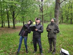 Tree care in Kaunas oak forest