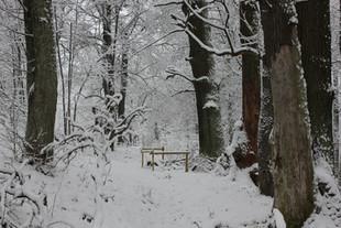 Neries upės šlaite ties Verkiais užbaigti medžių senolių priežiūros darbai
