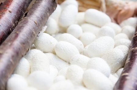 Silk Protein In Skincare