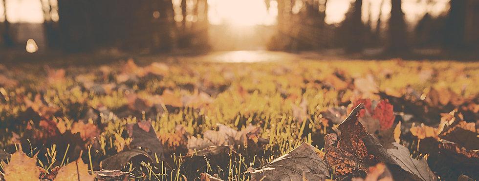 Fall%2520Foliage_edited_edited.jpg