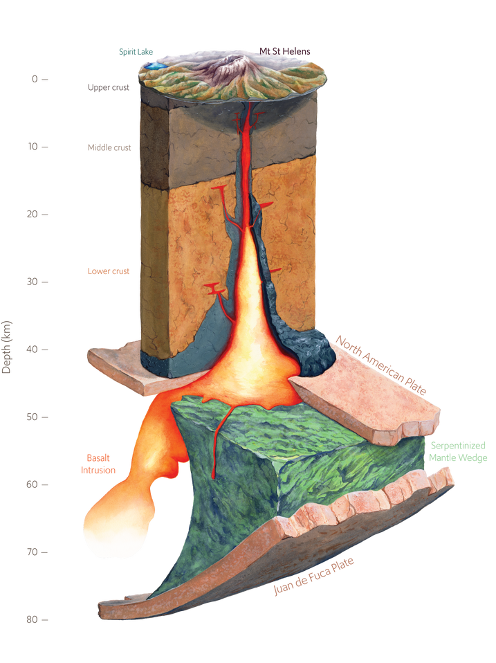 Beneath Mount Saint Helens is a fascinating geophysical structure. A chunk of serpentinzed rock wedged between the North American and Juan de Fuca plates.
