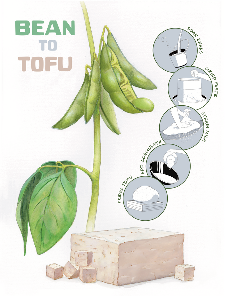 The green soybean plant is converted into tan tofu in 5 steps.