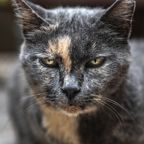 Cat portrait 4.jpg