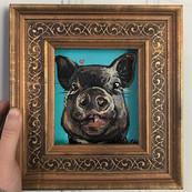 Crusher the mini house pig