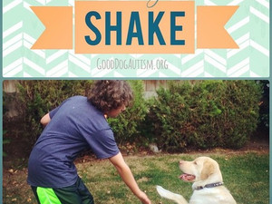 Companion Command - Shake