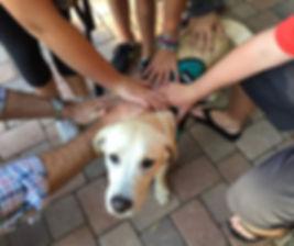 puppyraiserhandson_1.jpg