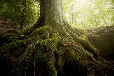 tree roots and sunshine in a green fores
