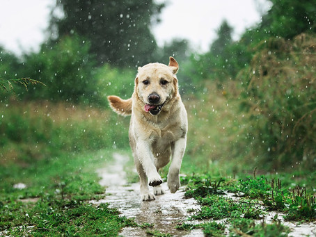 5 ways to keep your pet healthy during the monsoon