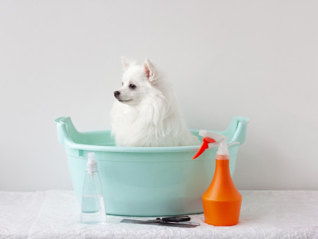 Why choose natural pet care products?