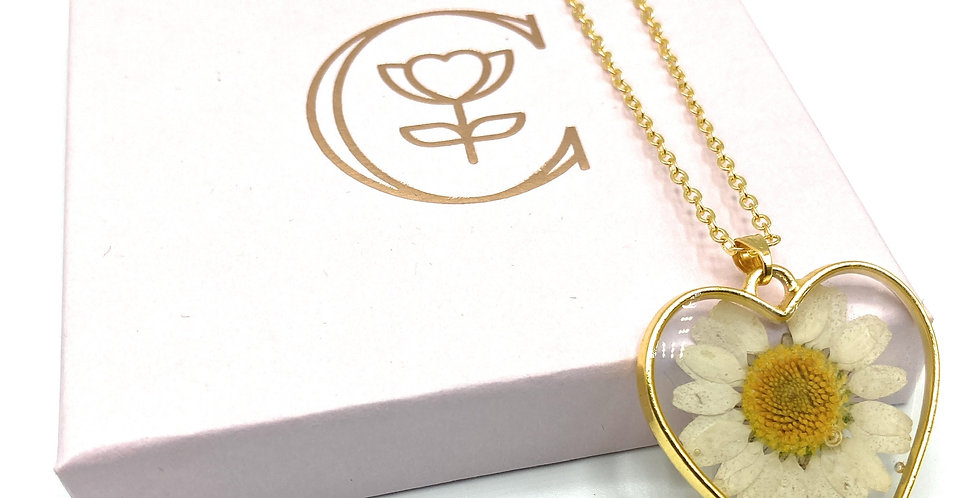 Heart shaped Real pressed Daisy necklace with Gold plated chain