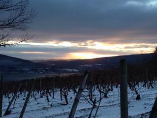 Frozen Harvest - Ice Wine