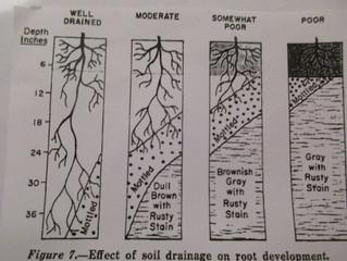 Finger Lakes Winemakers chime in on Terroir Debates