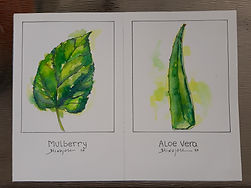 Card Style Botanical Drawing of a Leaf b