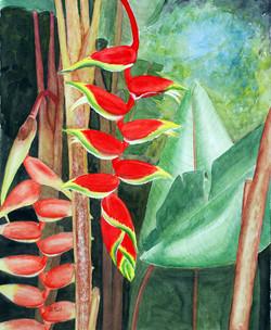 Heliconia Rostratum