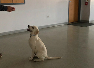 Hero the Therapy Dog: A New Addition to our Alcohol and Drug Rehab Programs