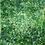 Thumbnail: Greenery