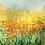 Thumbnail: Spring Gold