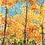 Thumbnail: Golden Fall