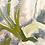 Thumbnail: Flower Painting