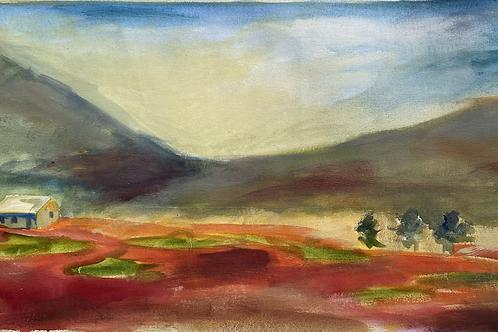 Study of poppy fields in provence