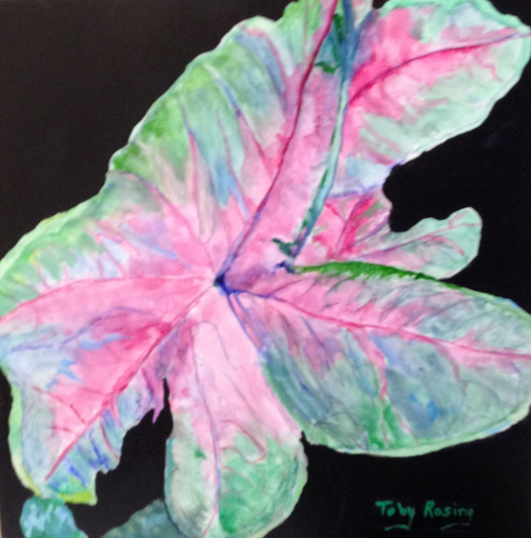 Caladium Leaves - Watercolor