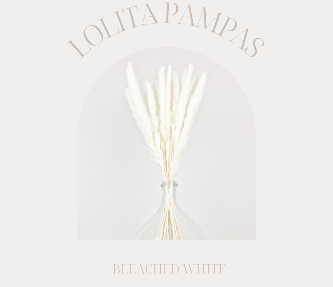 White Lolita Pampas