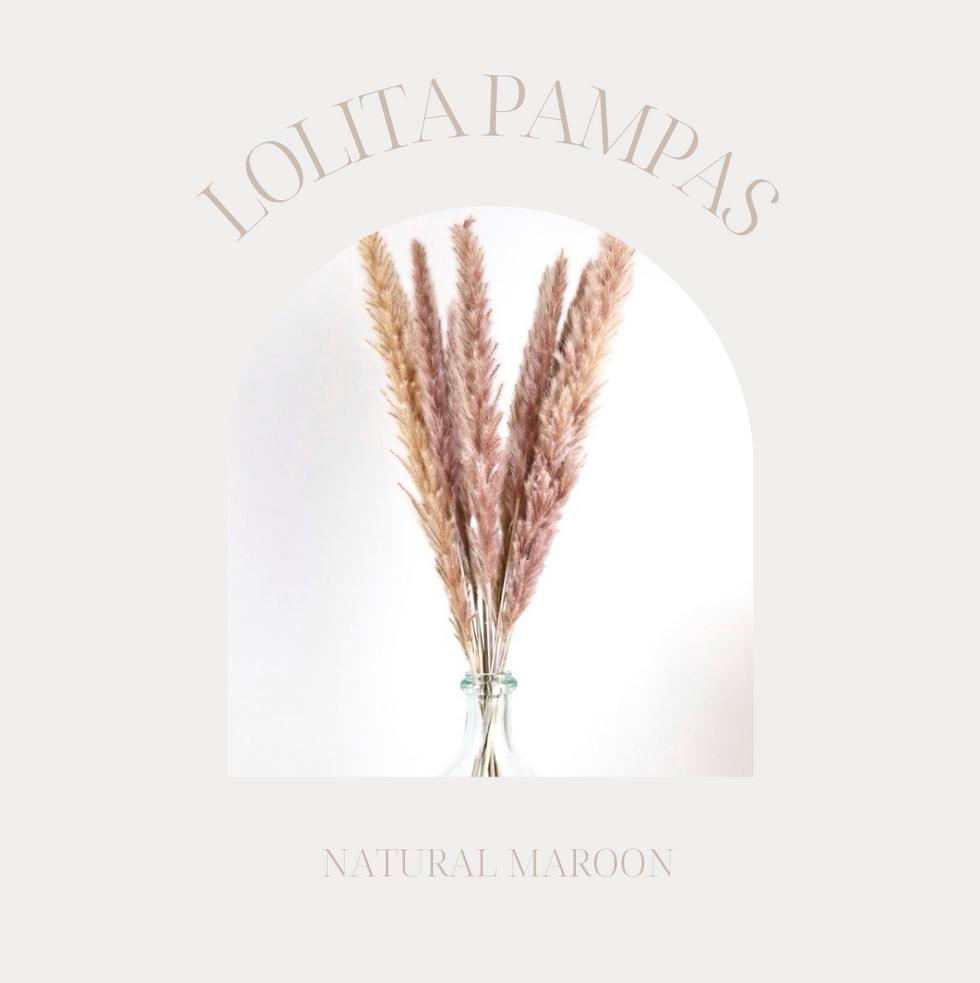 Maroon Lolita Pampas
