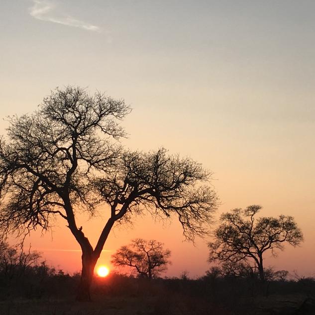 Knob thorn sunset.