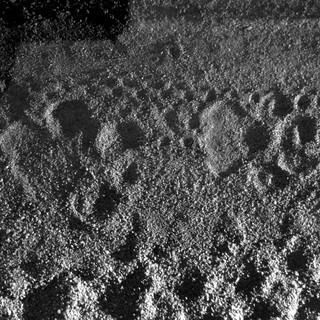 Leopard tracks over bike tracks.