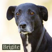 Brigite