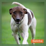 Belinha.jpg