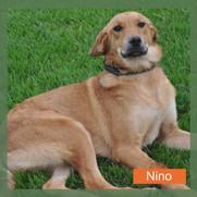 Nino.jpg