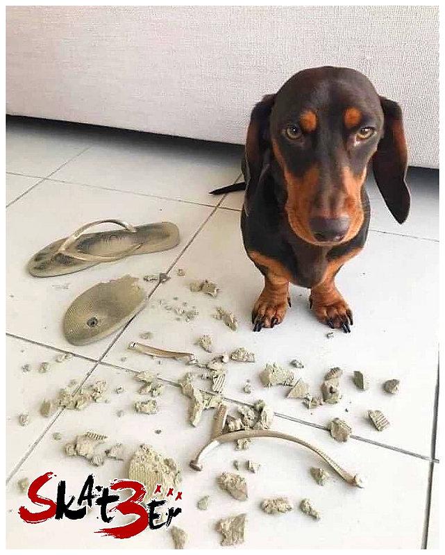03. Bon chien !.jpg