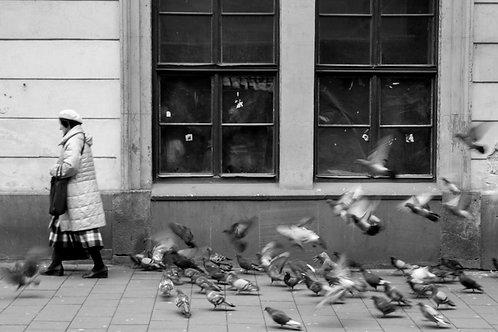 Flock to Feeder