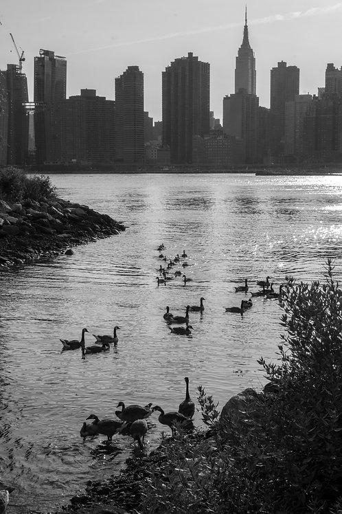 Quack City