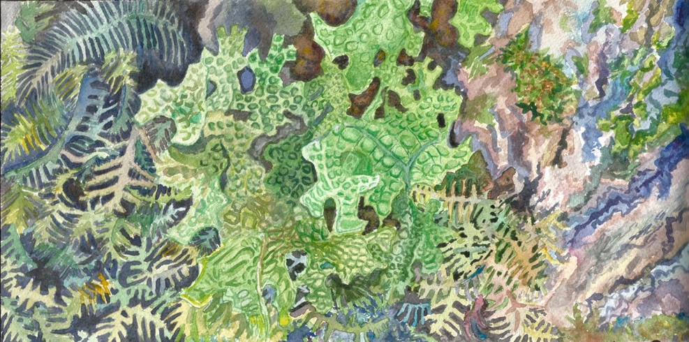 Ayers Lake Lung Lichen 2.jpg