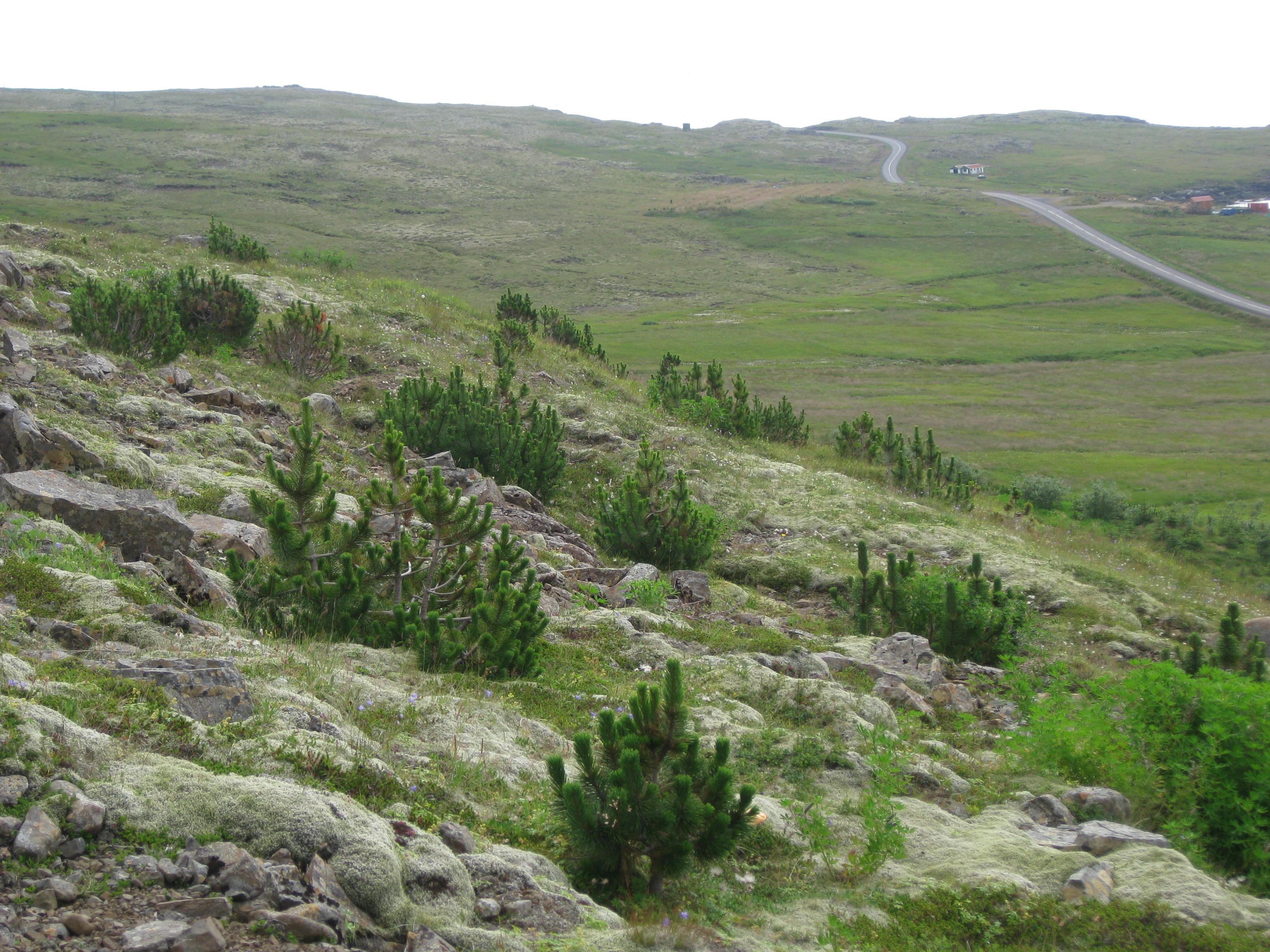 Dreifðar bergfurur á Stöðvarfirði